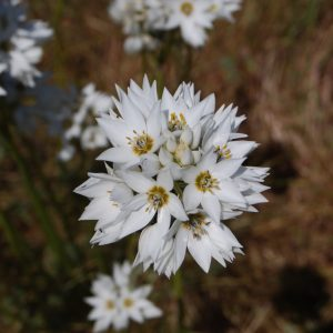 Stunning and versatile flora in Pringle Bay and Kogelberg Biosphere