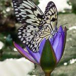 Butterfly World outside Stellenbosch