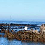 Fishing and angling is popular at Pringle Bay beach